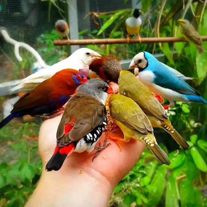 Beautiful Birds Image Prayer Tower Sharechat