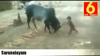 🙈 விலங்கு வேடிக்கை வீடியோ - Saranalayam Saranalayam - ShareChat