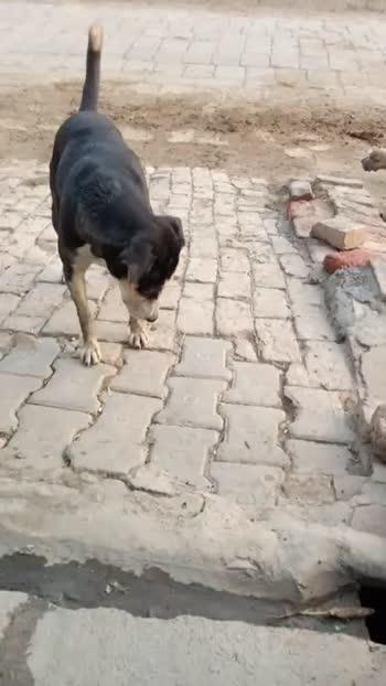 🐎पशुओ का वीडियो - ShareChat