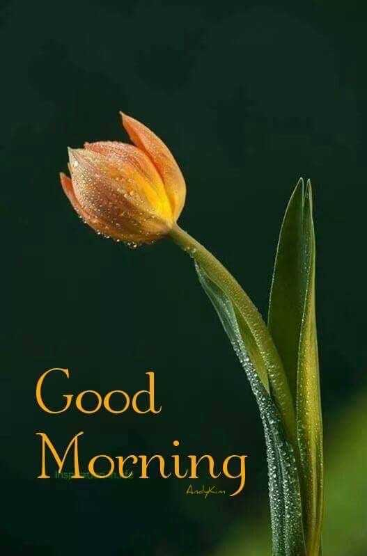 👙 18+ - Good Morning Ancy Kim MORE - ShareChat