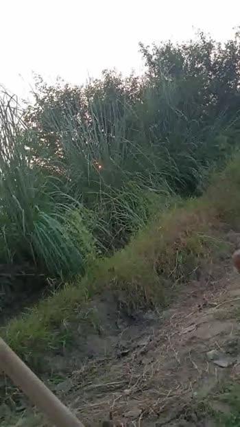 📹शेयरचैट कैमरा वीडियो चैलेंज - ShareChat