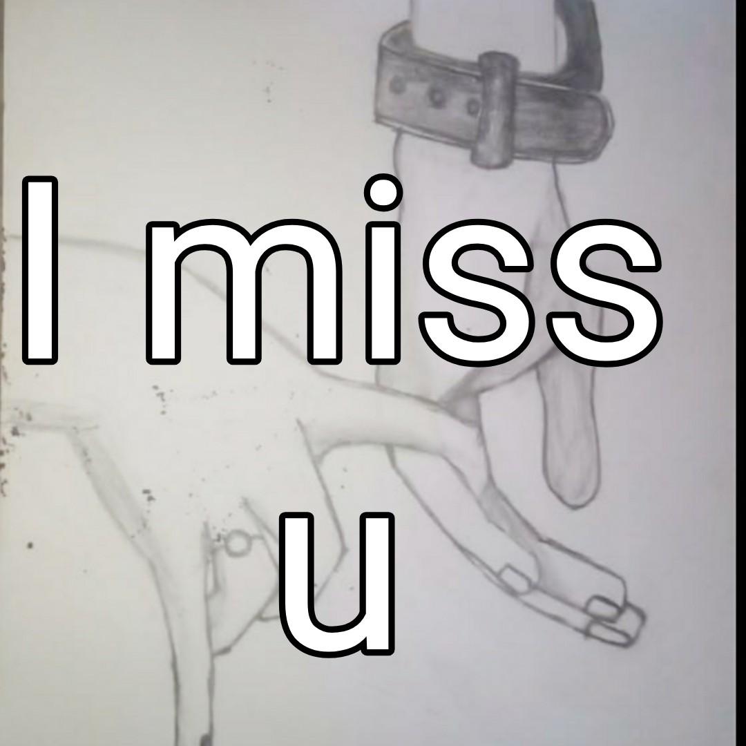 🌹प्रेमरंग - I miss - ShareChat