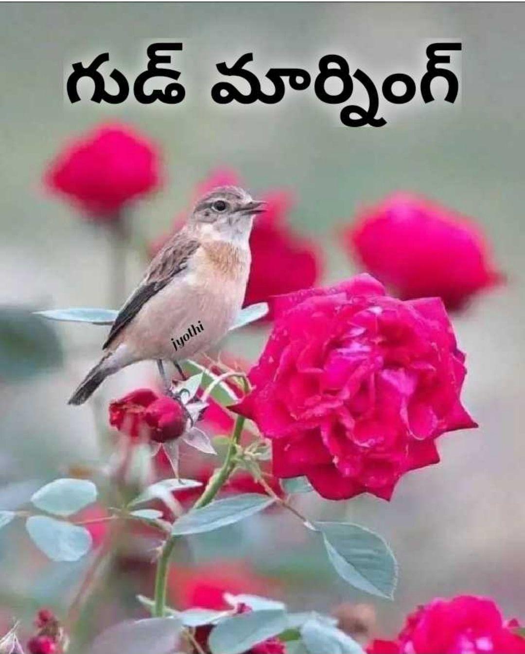 goodmorning - గుడ్ మార్నింగ్ jyothi - ShareChat