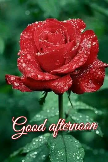 👋విషెస్ స్టేటస్ - Srinu Good afternoon Srinu Good afternoon - ShareChat