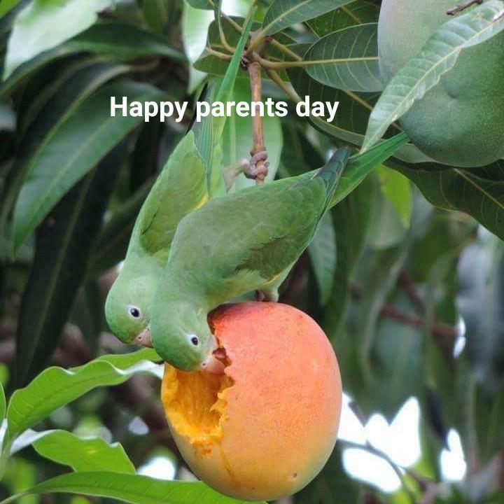 হ্যাপি পেরেন্টস ডে 👨👩👧 - Happy parents day - ShareChat