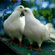 SAHASRA - Author on ShareChat: Funny, Romantic, Videos, Shayaris, Quotes