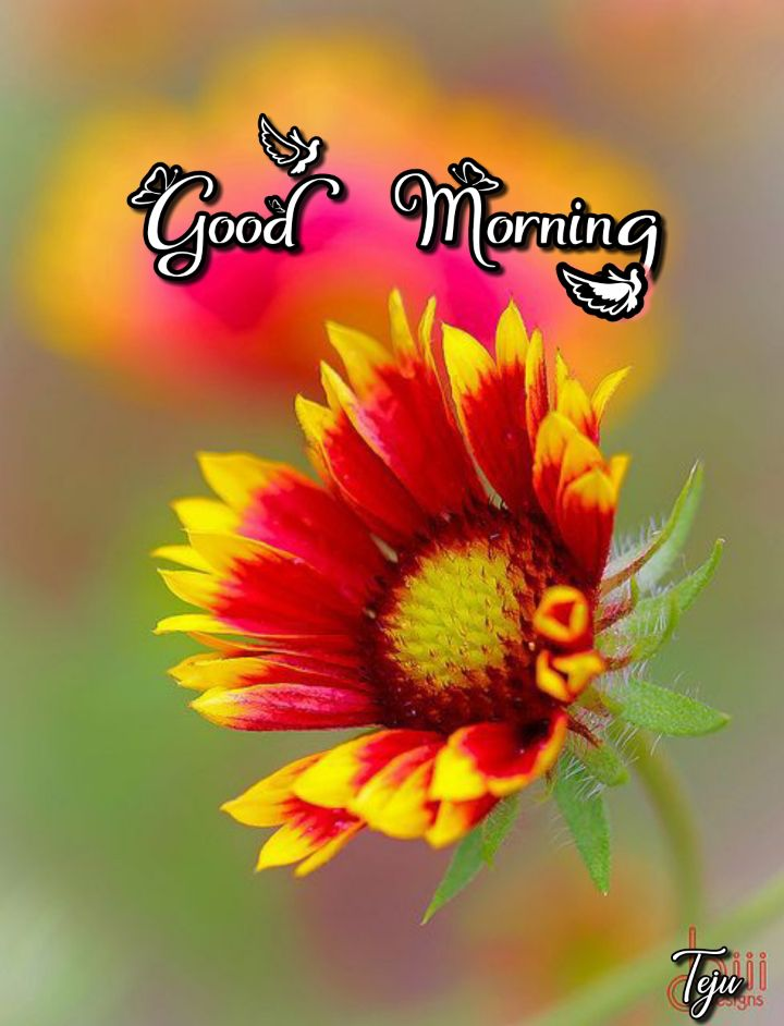 🌷 வாழ்த்து - CO Good Morning - ShareChat