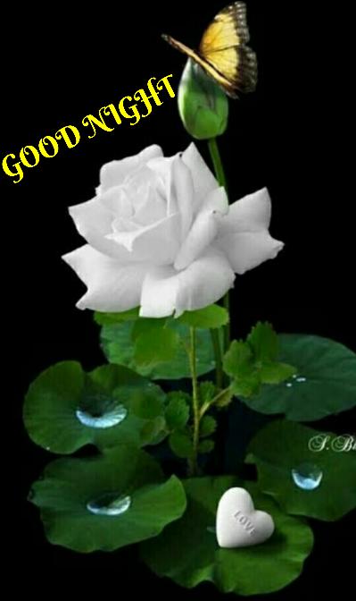 good 🌃 - GOOD NIGHT LOVE - ShareChat