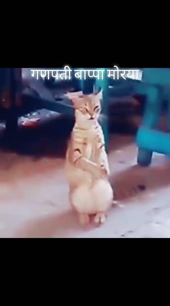👌🏻हटके व्हीडियो - ShareChat