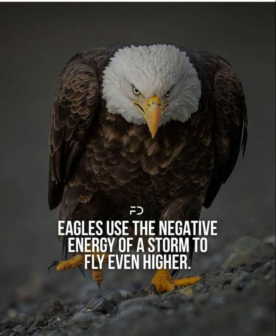 🌞காலை வணக்கம் - EAGLES USE THE NEGATIVE ENERGY OF A STORM TO FLY EVEN HIGHER - ShareChat
