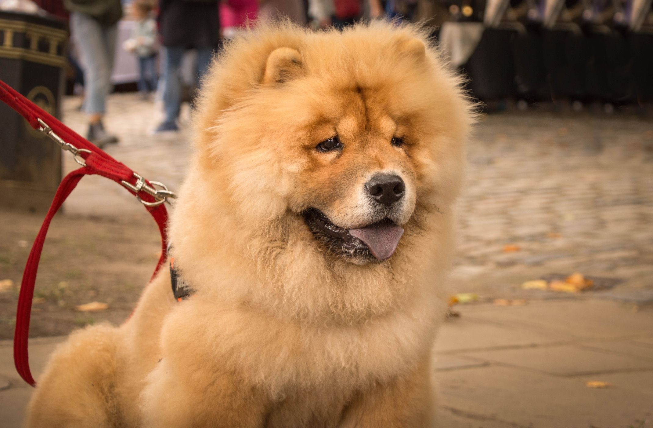 🐶 ਪੱਗ dog - ShareChat