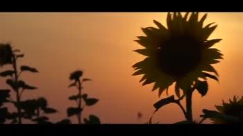 మిషన్ టీఆర్ఎస్ 16 - ShareChat