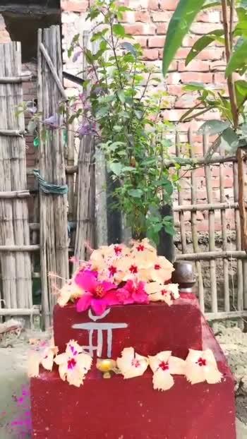 🙏 तुलसी विवाह - ShareChat