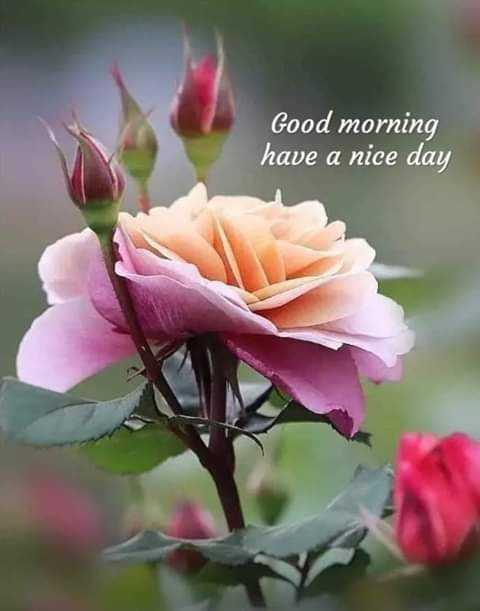 📰 2 ઓગસ્ટનાં સમાચાર - Good morning have a nice day - ShareChat