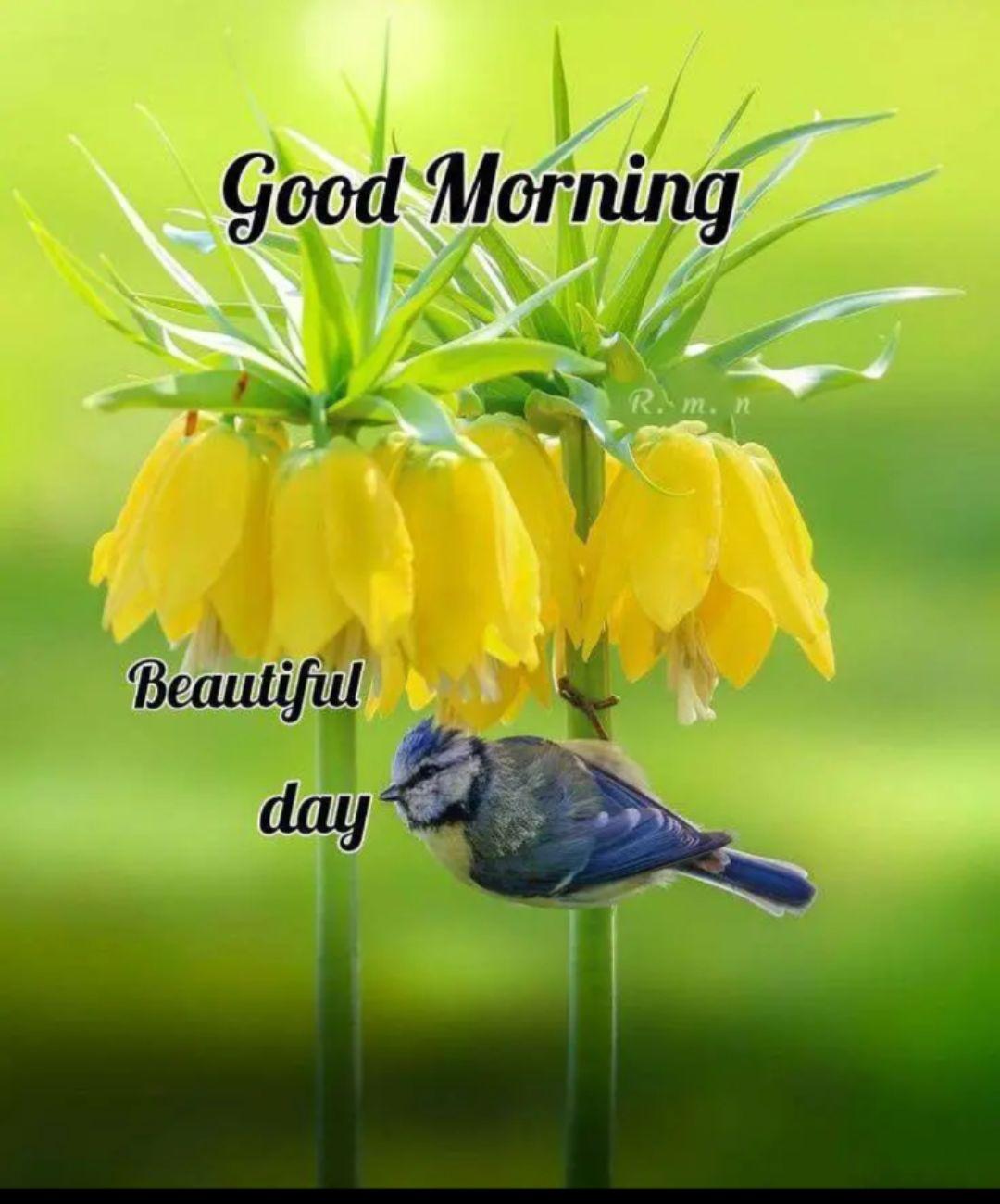 🌅శుభోదయం - Good Morning m . Beautiful day - ShareChat