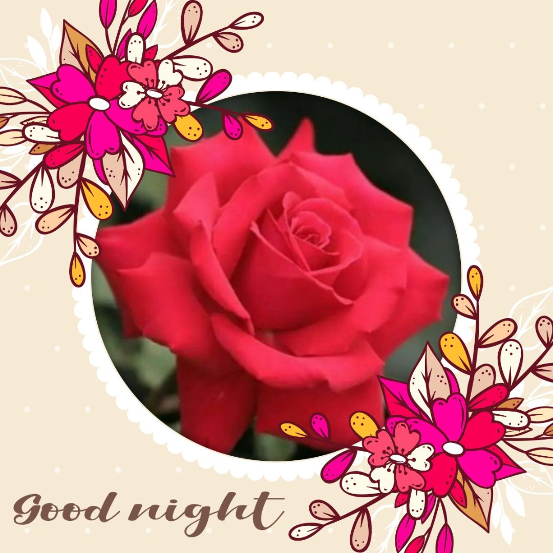 😴శుభరాత్రి - Good night 9 - ShareChat