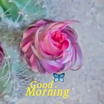 🌅 સુપ્રભાત 🙏 - Good Morning Good Morning - ShareChat
