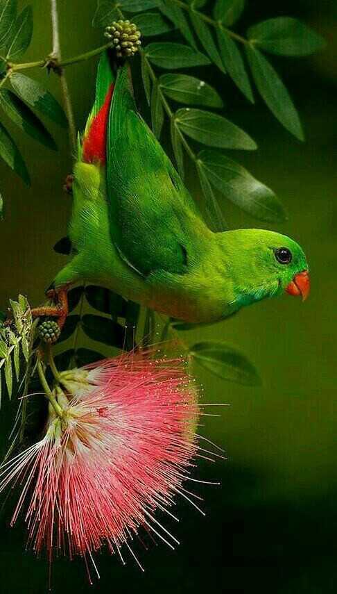 প্রিয় পাখি 🐦 - ShareChat