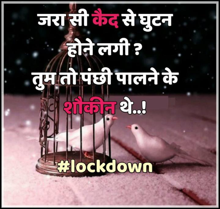 👌👌🌸वाह वाह क्या बात है🌸👌👌 - जरा सी कैद से घुटन . . होने लगी ? तुम तो पंछी पालने के शौकीन थे . . ! # lockdown - ShareChat