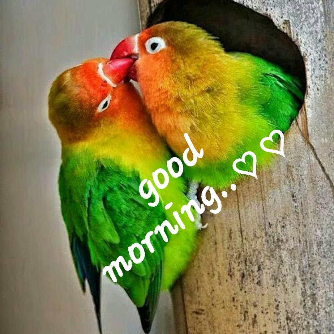 🌅శుభోదయం - good morning . . ♡ ♡ - ShareChat