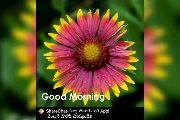 good morning... - Good Morning - ShareChat