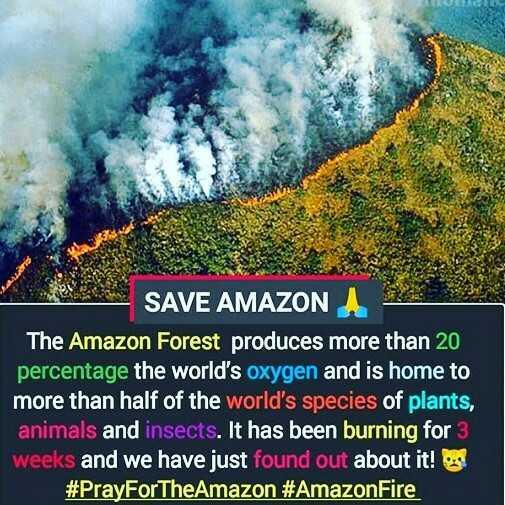 📰 23 ઓગસ્ટનાં સમાચાર - SAVE AMAZON The Amazon Forest produces more than 20 percentage the world ' s oxygen and is home to more than half of the world ' s species of plants , animals and insects . It has been burning for 3 weeks and we have just found out about it ! # PrayForTheAmazon # Amazon Fire - ShareChat