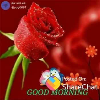 🌞সুপ্রভাত - पोस्ट करने वाले : @ yug0667 GOOD MORNING MY LOVE ShareChat sweta Rathod yug0667 ShareChat Rico ! Follow - ShareChat