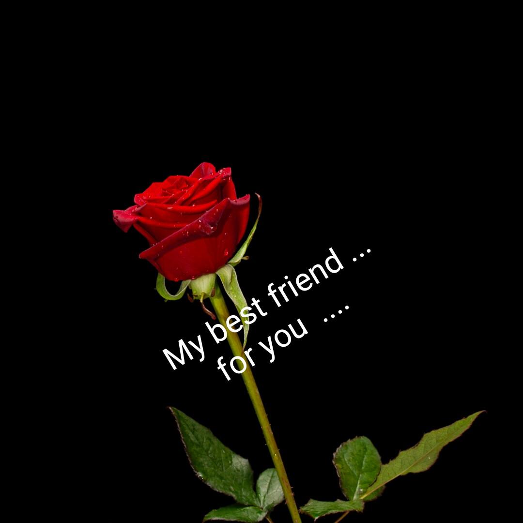 👯 દોસ્તી કોટ્સ - My best friend . . . for you . . . . - ShareChat