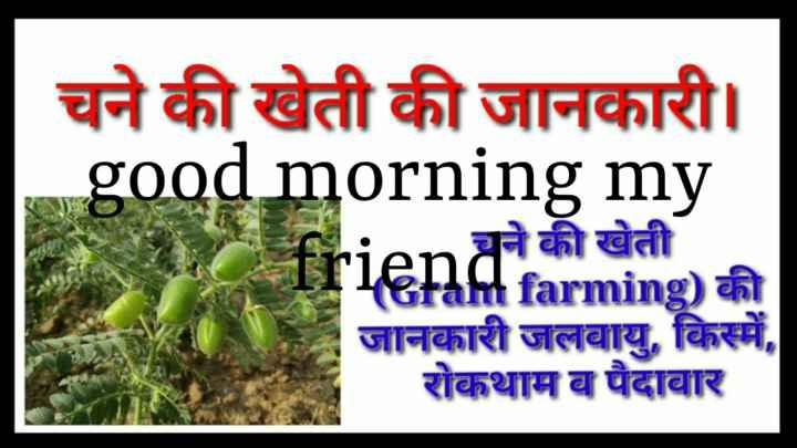 📰 25 ડિસેમ્બરનાં સમાચાર - चने की खेती की जानकारी । good morning my friendrarming ) की चने की खेती जानकारी जलवायु , किस्में , _ _ रोकथाम ब पैदावार - ShareChat