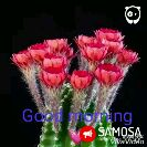 gd mng - Good morning SAMOSA DownViva Video MESSAGE US ON VIDEO @ BOREDPANDA . COM MESSAGE US CON Good morning SAMOSA - ShareChat