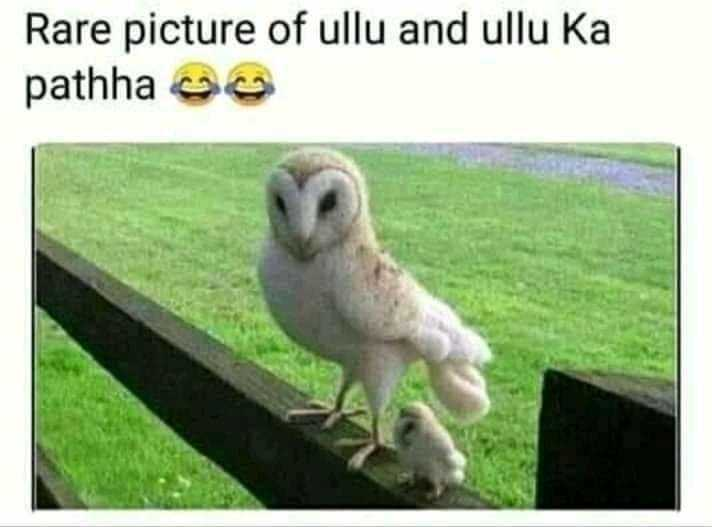 📰 28 जुलाई की न्यूज़ - Rare picture of ullu and ullu Ka pathha 9 - ShareChat