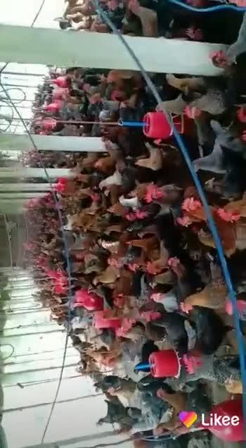 📱 ডিজিটেল ইণ্ডিয়া - ShareChat