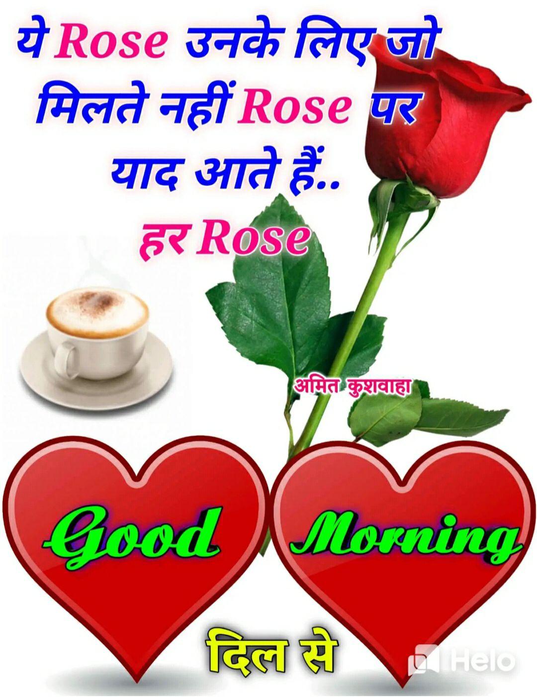 🌞 Good Morning🌞 - ये Rose उनके लिए जो मिलते नहीं Rose पर याद आते हैं . . हर Rose अमित कुशवाहा Good Morning दिल से Hel - ShareChat