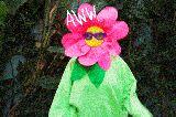 ಸಂಕ್ರಾಂತಿ  ವೀಡಿಯೊ - AWW - ShareChat