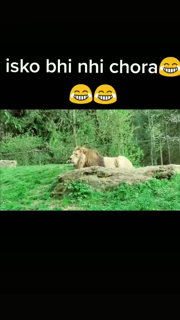 funny video😄 - ShareChat