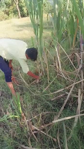 🥦माझ्या शेताचे व्हिडीओ - ShareChat