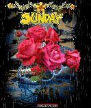 happy Sunday - SUNDAY ENT FUNSCRAPE . COM - ShareChat
