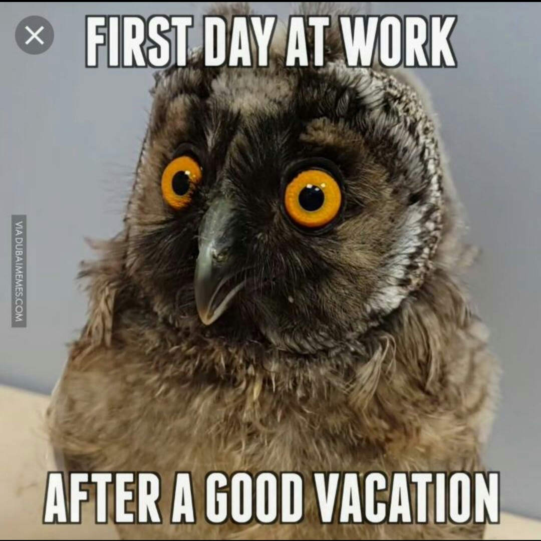😩 શાળાનો પ્રથમ દિવસ - ® FIRST DAY AT WORK VIA DUBAIMEMES . COM AFTER A GOOD VACATION - ShareChat