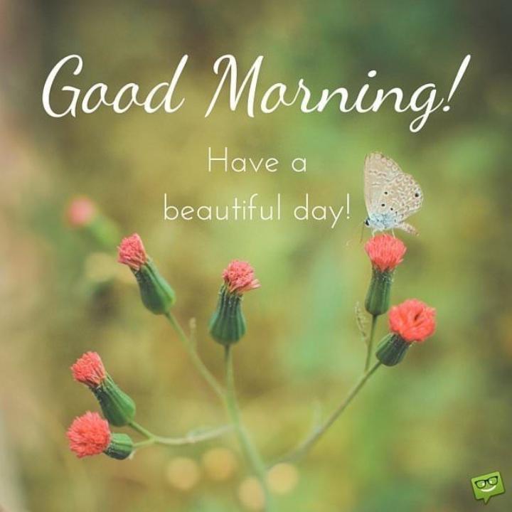 🌞 ഗുഡ് മോണിംഗ് - Good Morning ! Have a beautiful day ! - ShareChat
