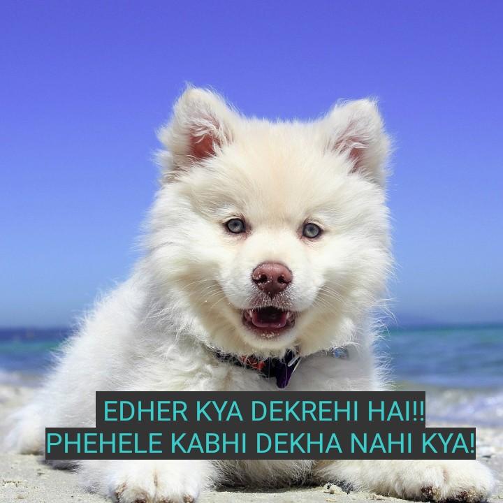 cute dog 🐶 🐶 - EDHER KYA DEKREHI HAI ! ! PHEHELE KABHI DEKHA NAHI KYA ! - ShareChat