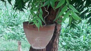 🌳 વૃક્ષો વાવો - ShareChat