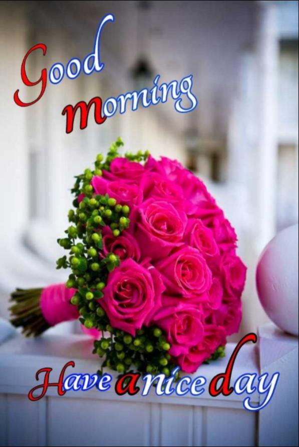 💐 શુભ મંગળવાર - yood Morning Have a nice day - ShareChat