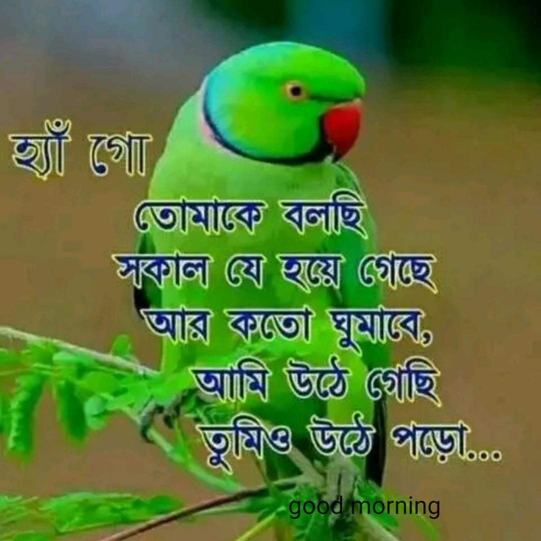good.morning - হ্যাঁ গোঁ ) তােমাকে বলছি কাল যে হয়ে গেছে   আর কতাে ঘুমাবে , আমি উঠে গেছি তুমিও উঠে পড়াে , good morning good morning - ShareChat