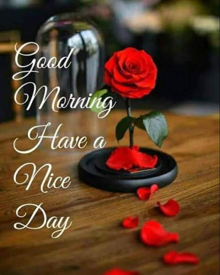 🌅శుభోదయం - Have a Nice Day - ShareChat