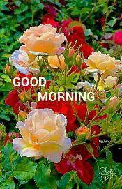 🤣হাস্যকর ভিডিও - GOOD MORNING Walid , Photos Egrict - ShareChat