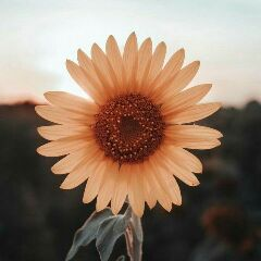 ప🍎డు...! - Author on ShareChat: Funny, Romantic, Videos, Shayaris, Quotes