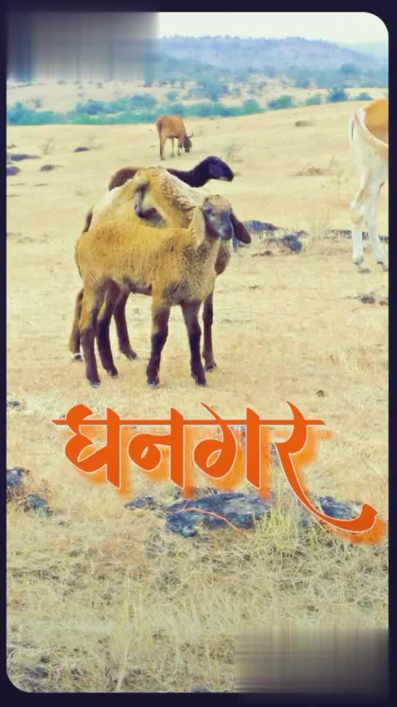 जय अहिल्या - @ sagar _ sandy गटार्ग @ Sagar Sandy @ sagar _ sandy - ShareChat
