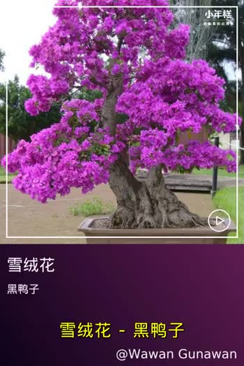 Tree - ShareChat