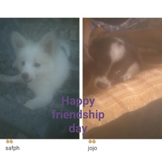 🎥 ਫਰੈਂਡਸ਼ਿਪ ਡੇ ਸਟੇਟਸ - Happy friendship day safph jojo - ShareChat