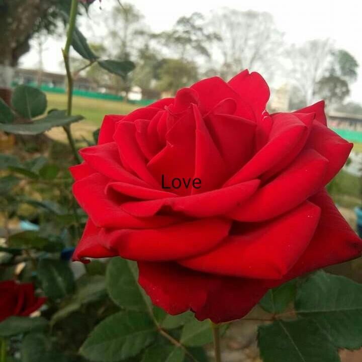 মায়ের সাথে সেলফি - Love - ShareChat